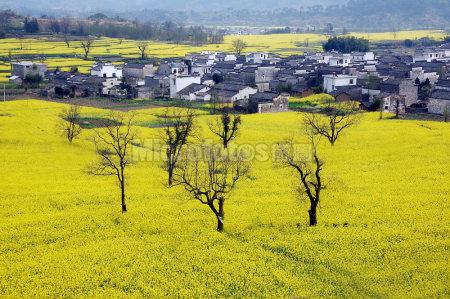 安徽芦村的春色