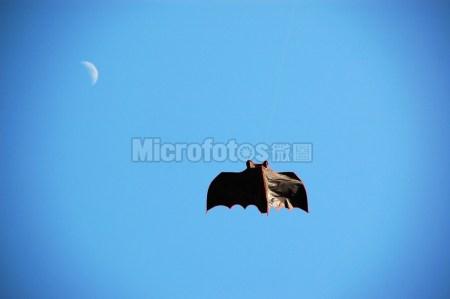 蝙蝠与月亮