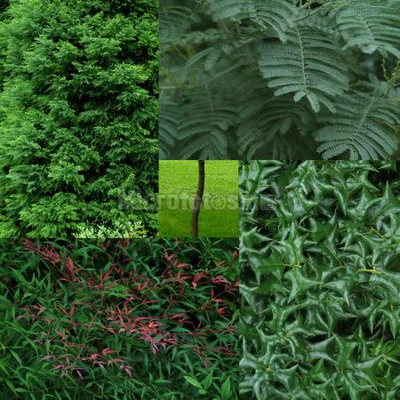 植被色块 Vegetation Color Block