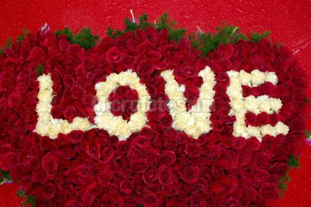 玫瑰LOVE