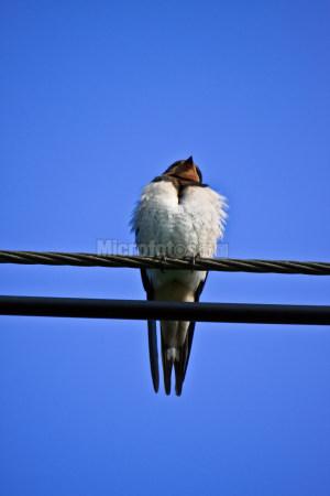 电线上的小鸟