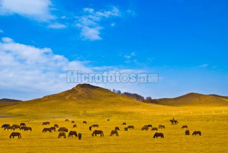 草原牧马图