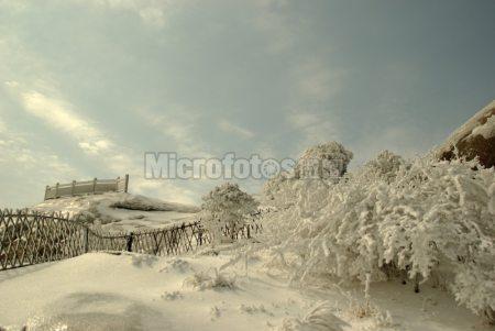 黄山雪景1
