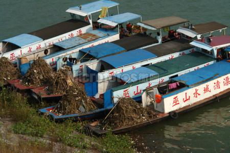 三峡水库清理垃圾