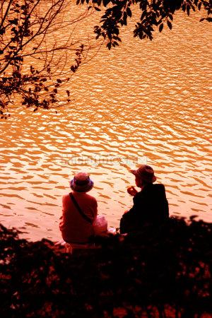 金色的池塘