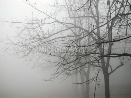 浓雾下的校园