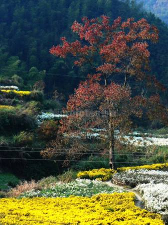 秋色 风景