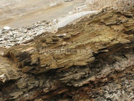 山旺硅藻土层