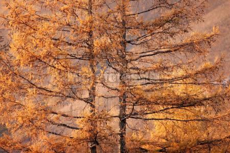 大兴安岭阿尔山林区晚秋风光