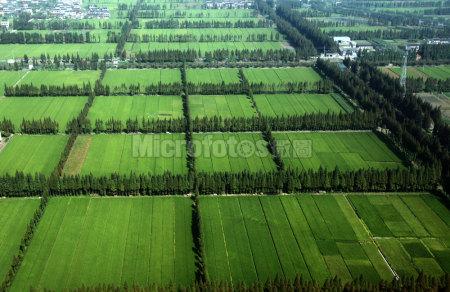 绿化农田林网