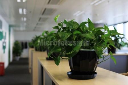 办公室绿植