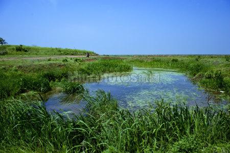 鄱阳湖湿地