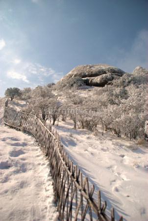 黄山雪景11