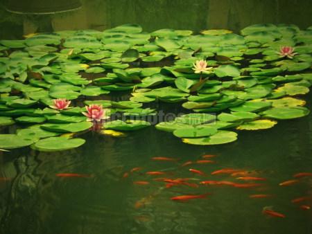 夏日 池塘