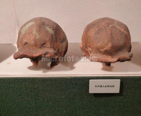 北京猿人头盖骨
