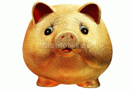 金色的小猪