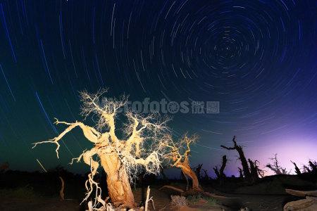 怪樹林北斗星星軌