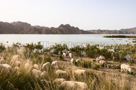 赤金峡水库
