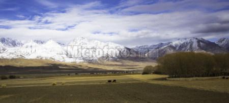 雪山之下的牧场