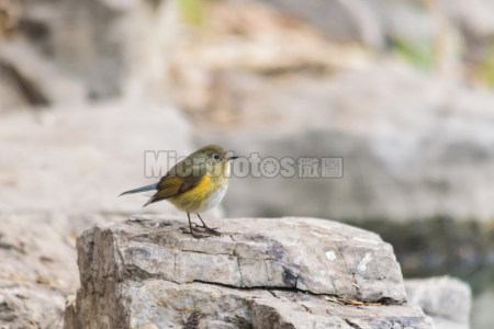 可爱小胖鸟