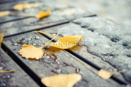 公园 银杏 落叶 黄色